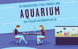 [Infographic] Should You Have an Aquarium in Your Office